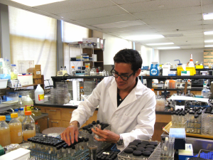 Photograph of Edward Torres Dominguez wearing a white lab coat and working in a lab, sorting through beakers.