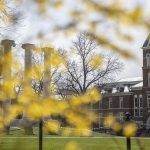 Mizzou's Columns and green, grassy Quad peek through the branches of a yellow flowering tree.